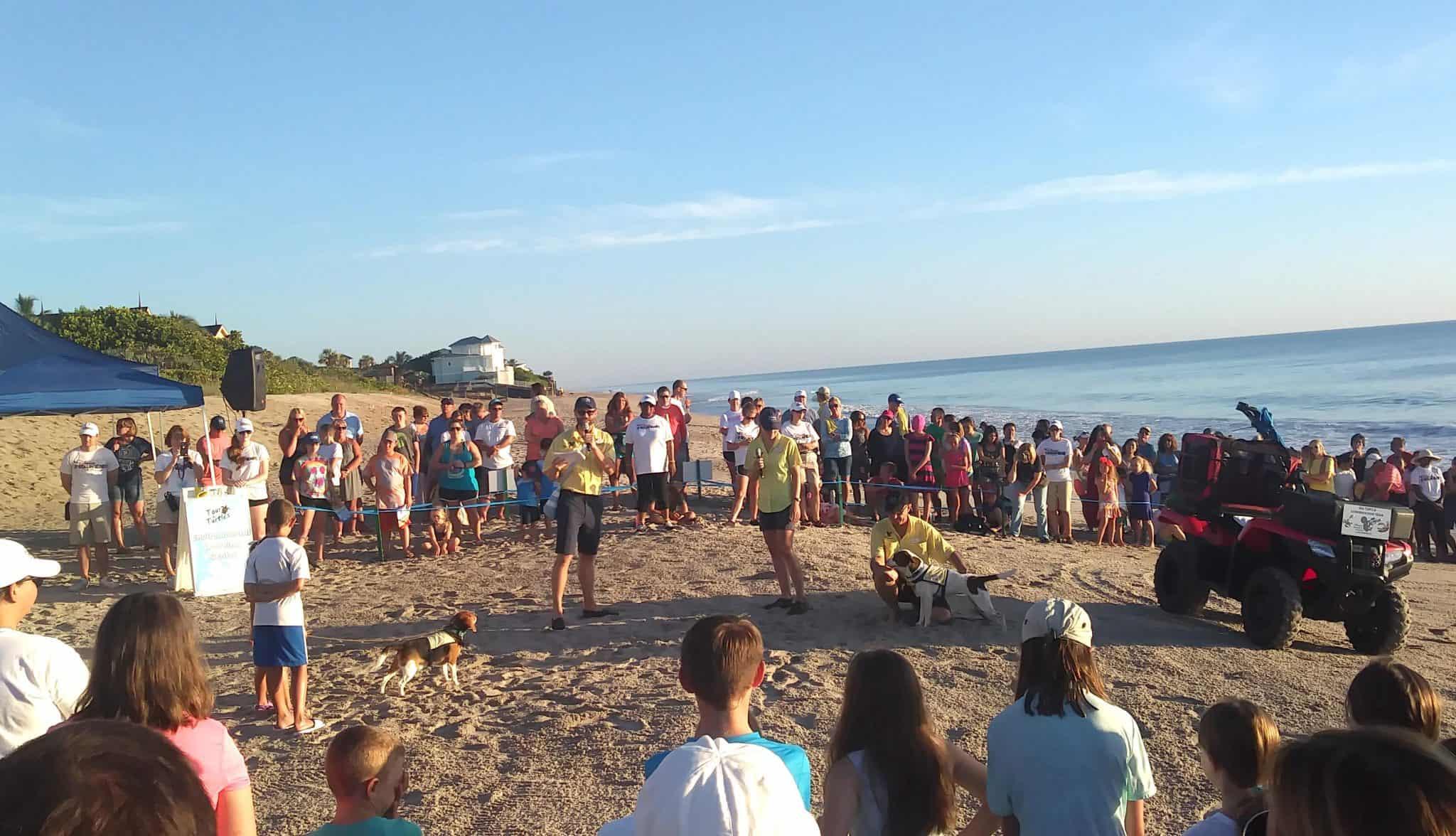 What we learned at theTour De Turtles at Disney's Vero Beach Resort - Captain Ron and Dori
