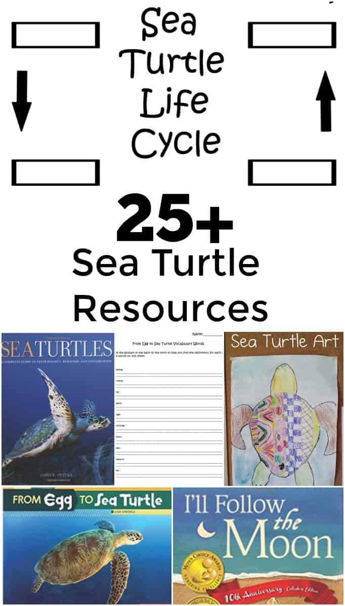 25 Plus Sea Turtle Resources - Includes crafts, books, websites, videos, and more! #education #edchat #seaturtles #stem #science #homeschool #homeschooling