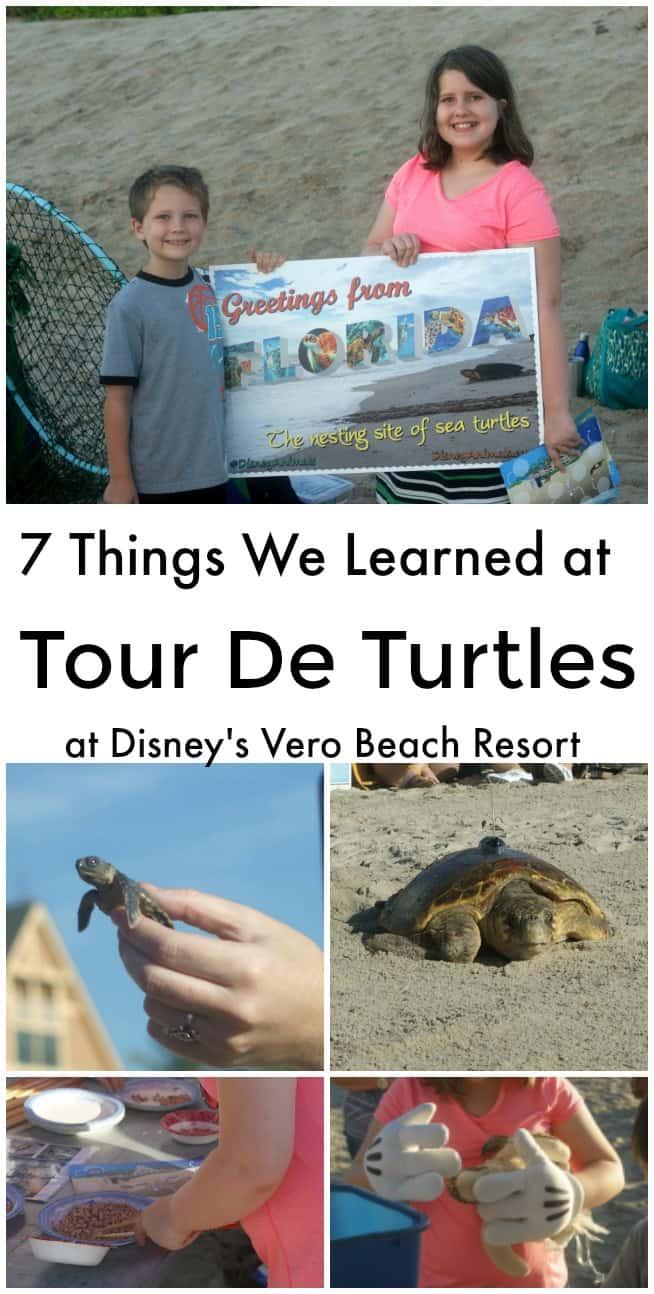 7 things we learned at Tour De Turtles at Disney's Vero Beach Resort - #Travel #Disney #VeroBeachResort #TourDeTurtles #seaturtles #education #educationaltravel #Florida