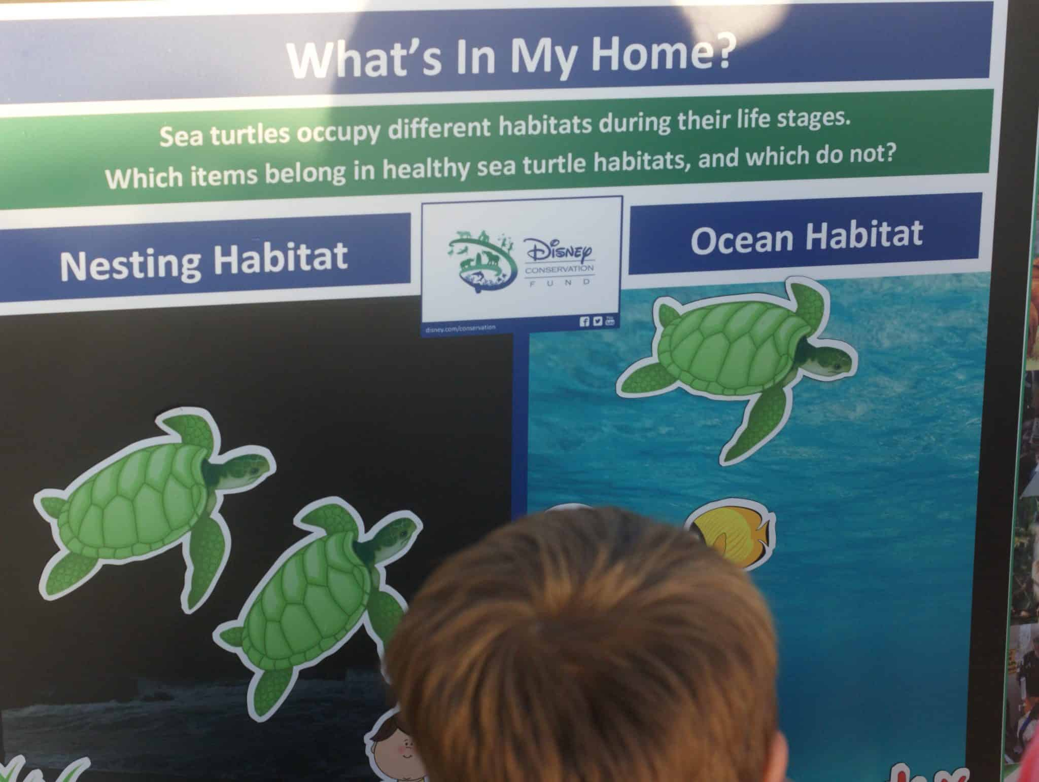 What we learned at the Tour De Turtles at Disney's Vero Beach Resort - What's in My Home?