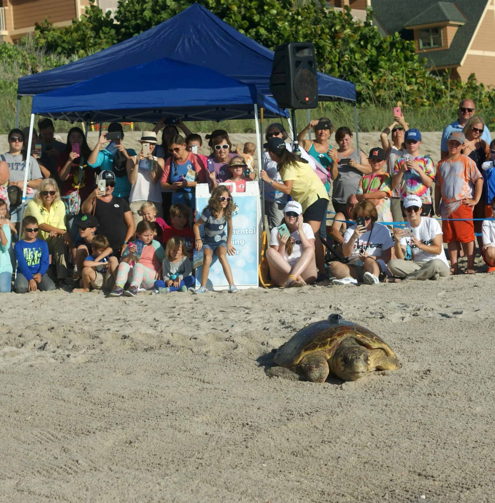 What we learned at theTour De Turtles at Disney's Vero Beach Resort - Sea Turtle Release