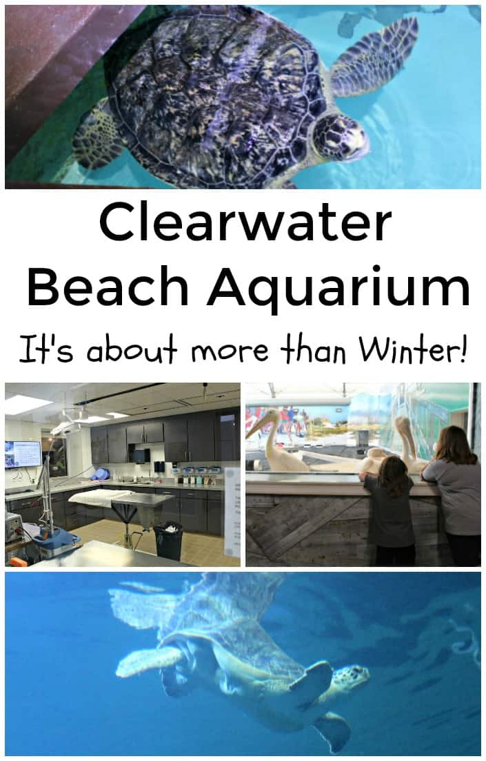 Clearwater Beach Aquarium - It's about more than Winter - #Florida #Travel