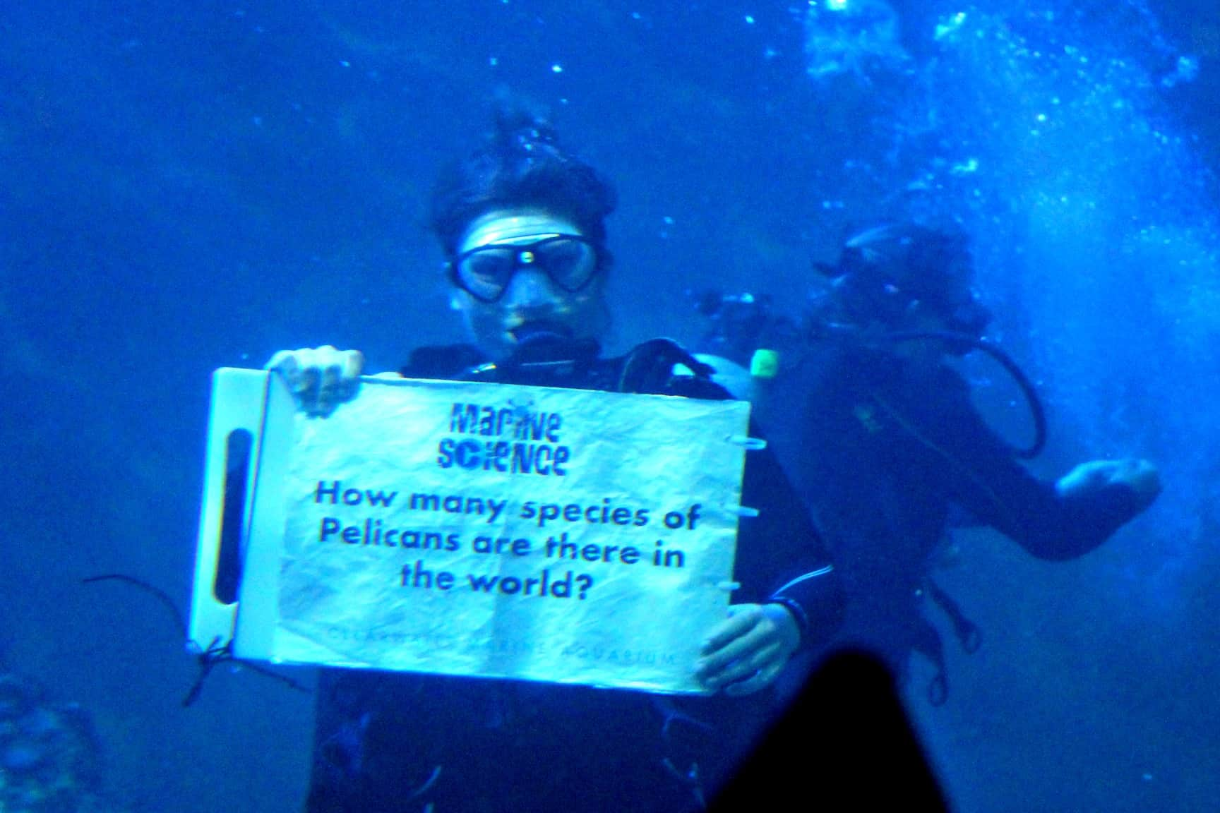 Clearwater Beach Aquarium Tips and Tricks - Scuba Diver